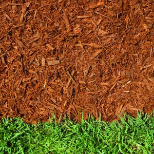 Golden colored hardwood shredded mulch in contrast to the green grass.